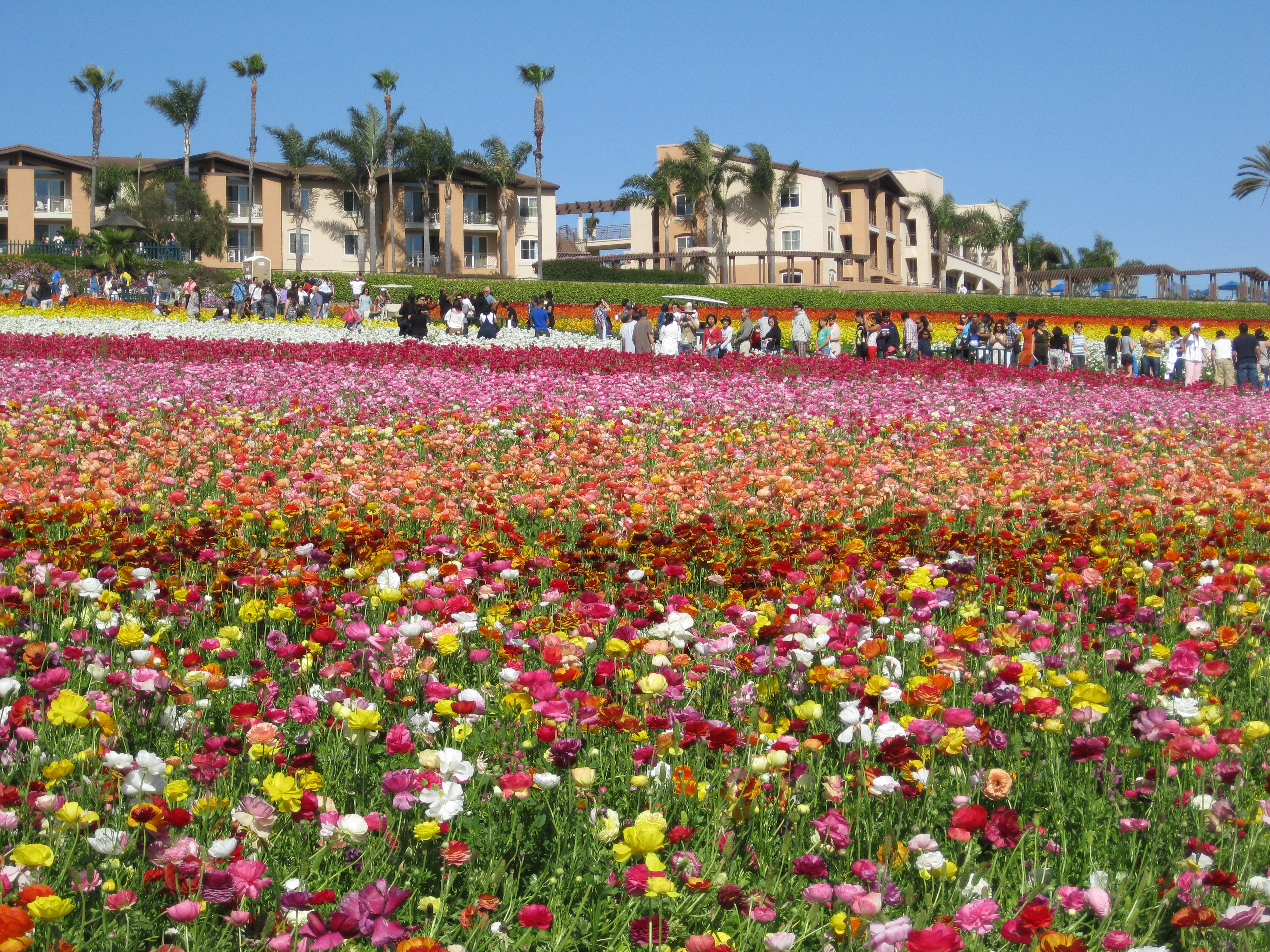 Coupons flower fields carlsbad